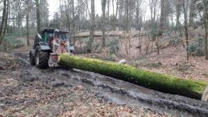 Udkørsel af bøgestammer fra Velling Skovene