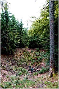 Velling Skov